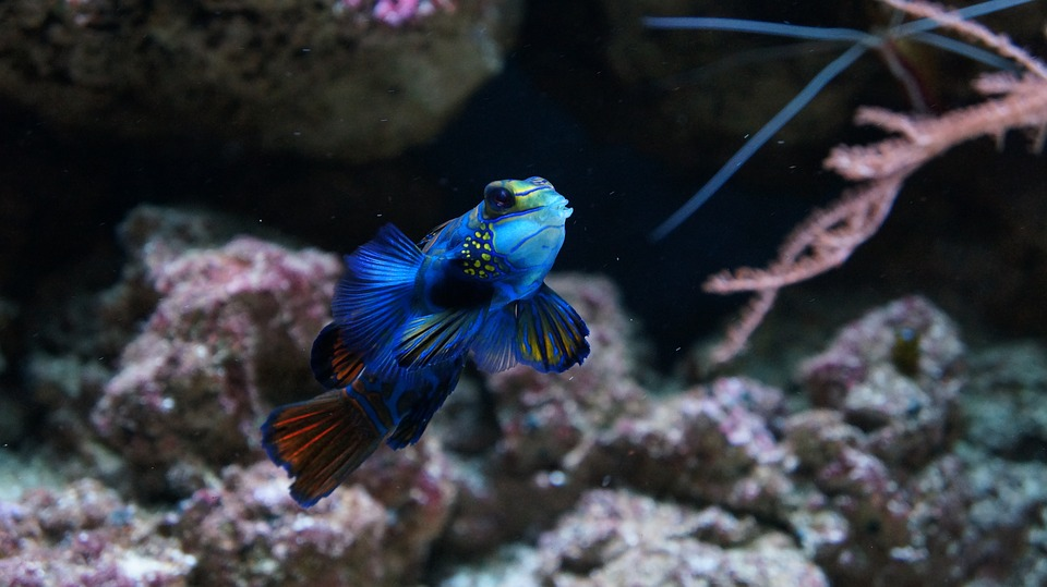 fish-1088780_960_720