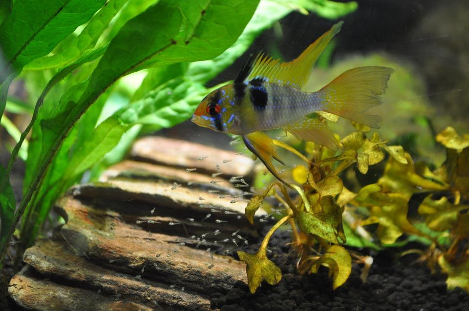 aquarium-963616_960_720