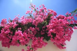 flowers-11131_960_720