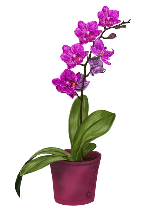 orchid-1453777_960_720